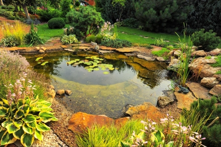 Ways To Draw Natural Wildlife Into Your Backyard Oasis
