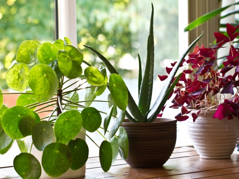 Best Plants For Apartment Living